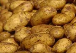 """""""التجارة"""" تنفي حظر روسيا إستيراد البطاطس المصرية"""