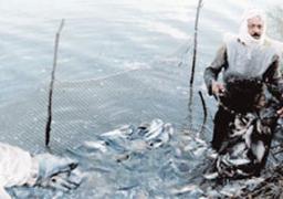 الزراعة تعلن وقف صيد الأسماك بالبحر الأحمر لمدة 7 أشهر
