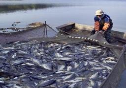 الزراعة :مصر الأولى أفريقيا والثامنة عالميا في إنتاج الأسماك