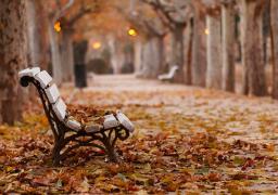 اليوم.. أول أيام فصل الخريف وطول الليل والنهار يتساويان