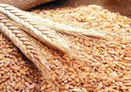 وزير التموين يتوقع تراجع واردات القمح من الخارج لوفرة الانتاج المحلي