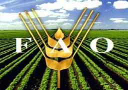 """""""الفاو"""": الزراعة الأسرية تنتج 80 % من المواد الغذائية في العالم"""
