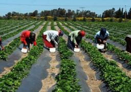 """""""الزراعة"""" تبدأ تلقي طلبات تحرير العقود لمزراعي سيناء الأحد"""
