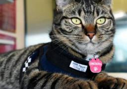 شرطة شيكاغو تعين قطة بوليسية في صفوفها