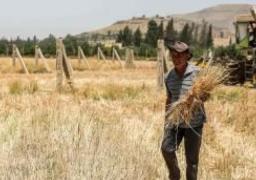 محاصيل القمح الوفيرة تنعش آمال السوريين