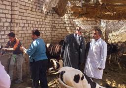 """الزراعة: تحصين أكثر من 3 مليون رأس ماشية ضد """"القلاعية والوادي المتصدع"""""""