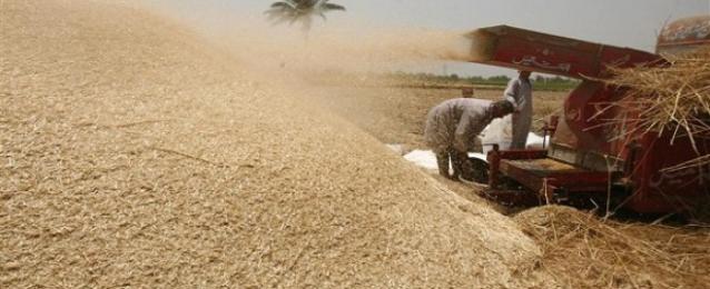 التموين: مصر تشتري 7.3 مليون طن قمح محلي.. والاحتياطي يكفي 6 أشهر