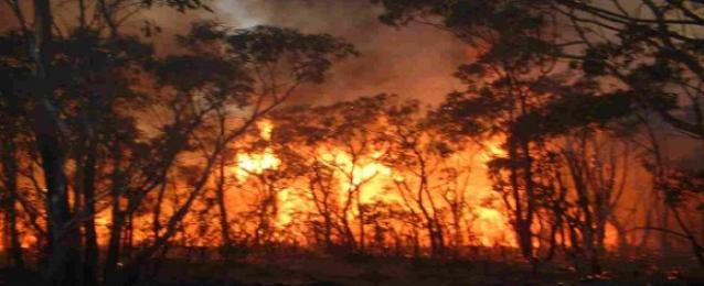 حرائق الغابات فى واشنطن تدمر 200 منزل وتلتهم 243 ألف فدان