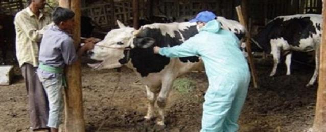 إجراءات وقائية بالسويس للوقاية من الإيبولا والحمى القلاعية
