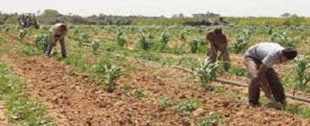 """""""السعودية المصرية"""" تعلن عن مبادرة لاستصلاح 10آلاف فدان توفر 10 آلاف فرصة عمل"""