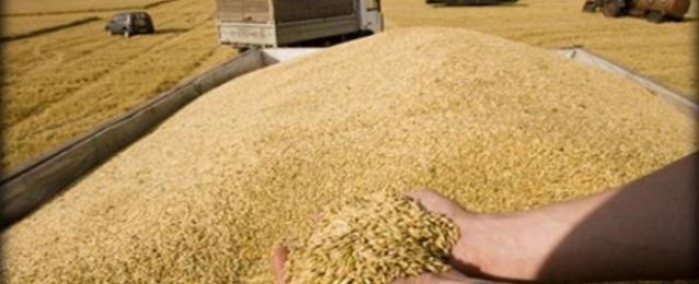 هيئة السلع التموينية المصرية تغير شروط السداد بمناقصات القمح